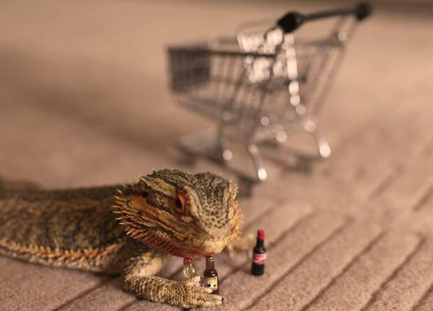Милейший ящер, который очень любит своего хозяина Прингл, дракон, животные, ящер