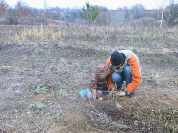 посадка смородины на грядки валы: Органическое земледелие, пермакультура
