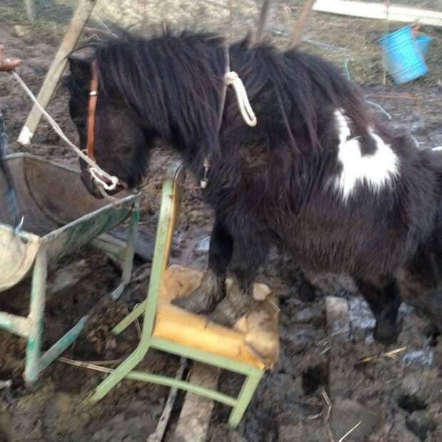 7 лошадей спасли на болоте, из-за колючей проволоки… Но главный узник был заперт в трейлере!