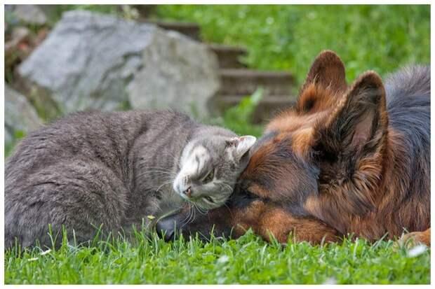 Кошка и собака в одной квартире. Любовь или война?  дружба, животные, кошки, собаки