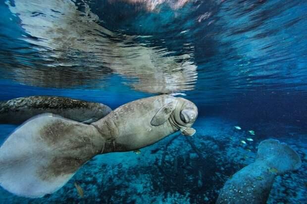 Морская жизнь как она есть