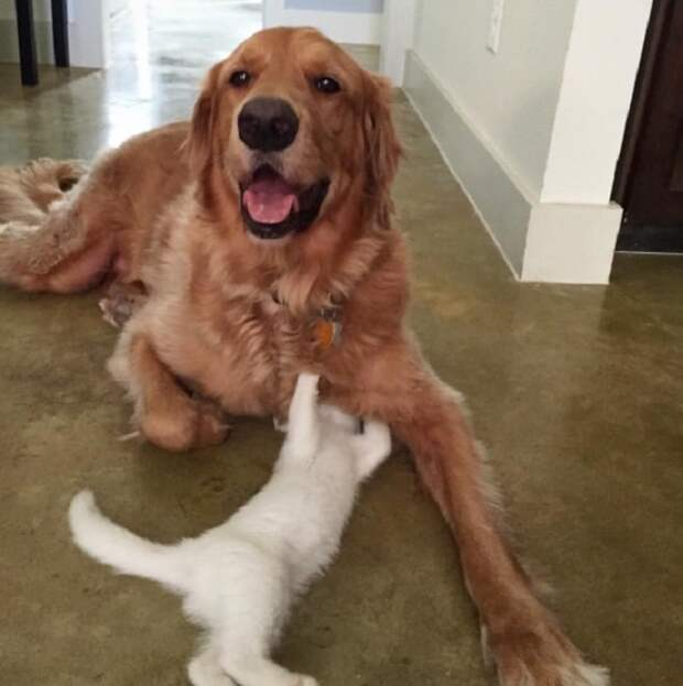 Веселая собака и котенок