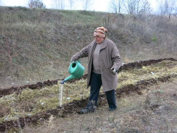 полив ЭМ бокаши: Органическое земледелие, пермакультура