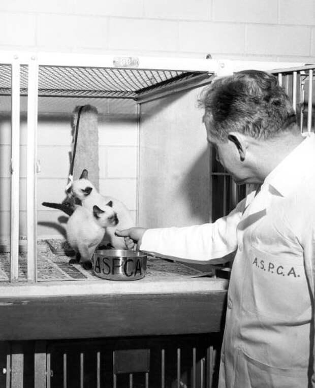 Милейшие винтажные снимки животных из архива Общества защиты животных