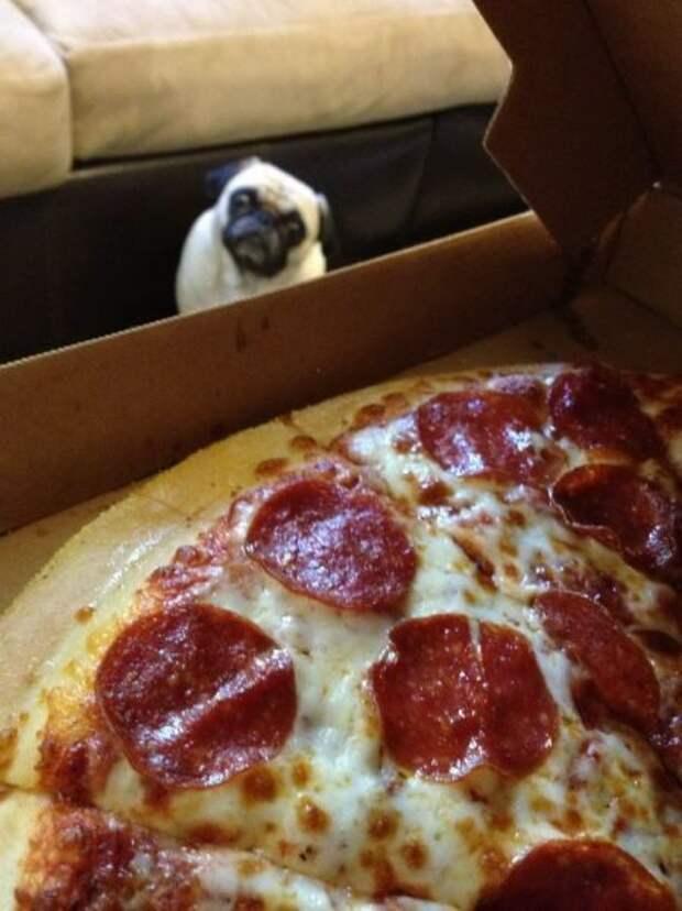 40 животных, которые любят пиццу больше, чем жизнь