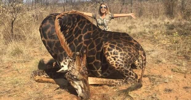 Американка застрелила жирафа и устроила фотосессию с трупом животного ради лайков