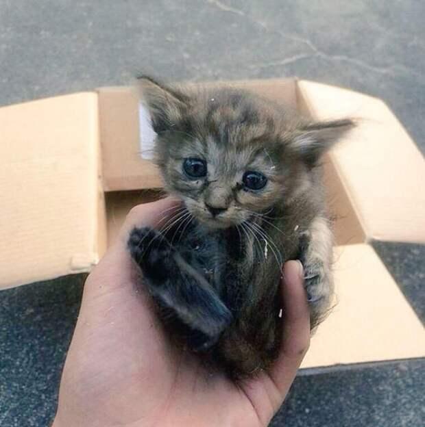 Этот котенок попал в семью к хорькам и теперь сам думает, что он хорек