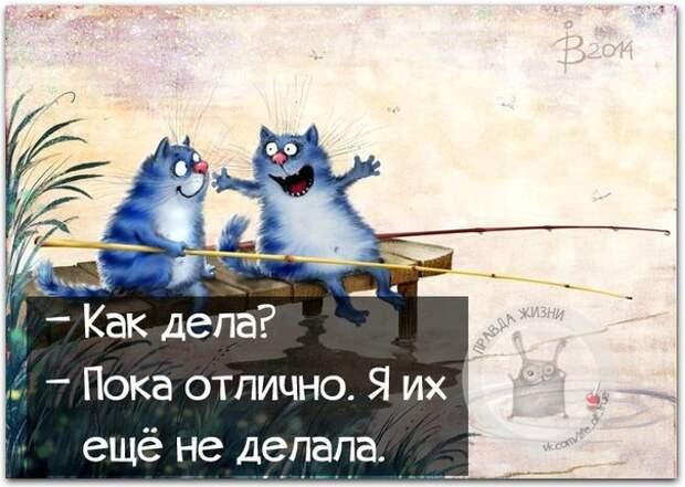 5672049_1447960839_frazki9 (604x430, 70Kb)