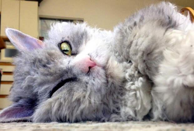 6 животных, ставших знаменитостями на просторах Инстаграма