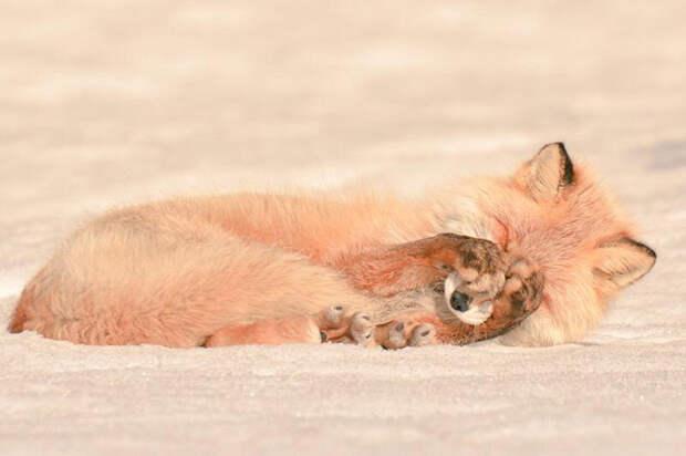 7 очаровательных обитателей острова Хоккайдо  животное, остров, хоккайдо