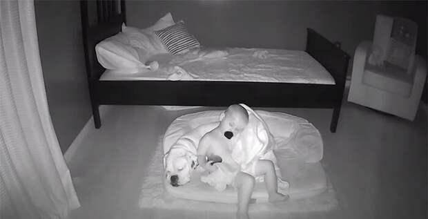 Малыш посреди ночи выбирается из своей кровати, чтобы спать на полу в обнимку с лучшим другом