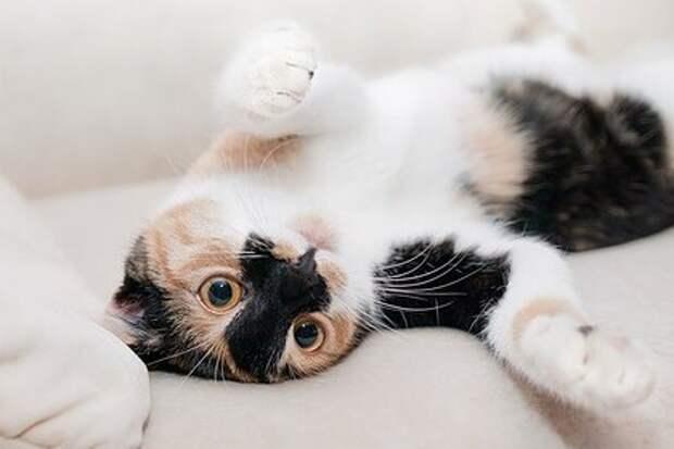 Женщина ушла с работы ради взаимопонимания с кошками