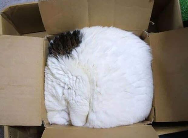 Позитивные фотографии, доказывающие, что коты могут спать где угодно