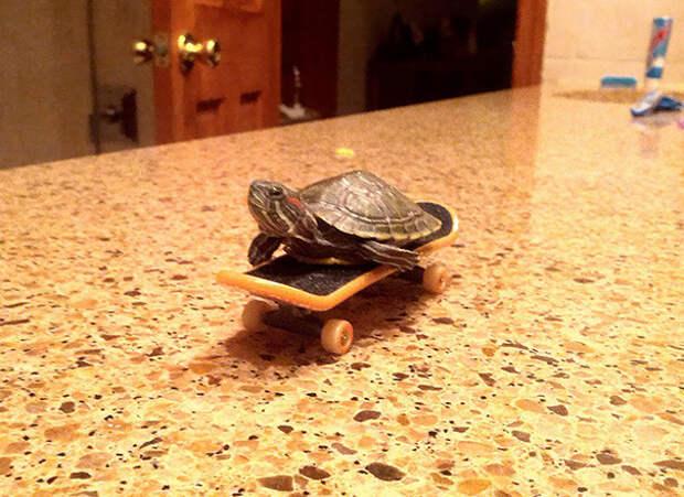 26. Маленький скейтбордист ниндзя, питомцы, черепахи