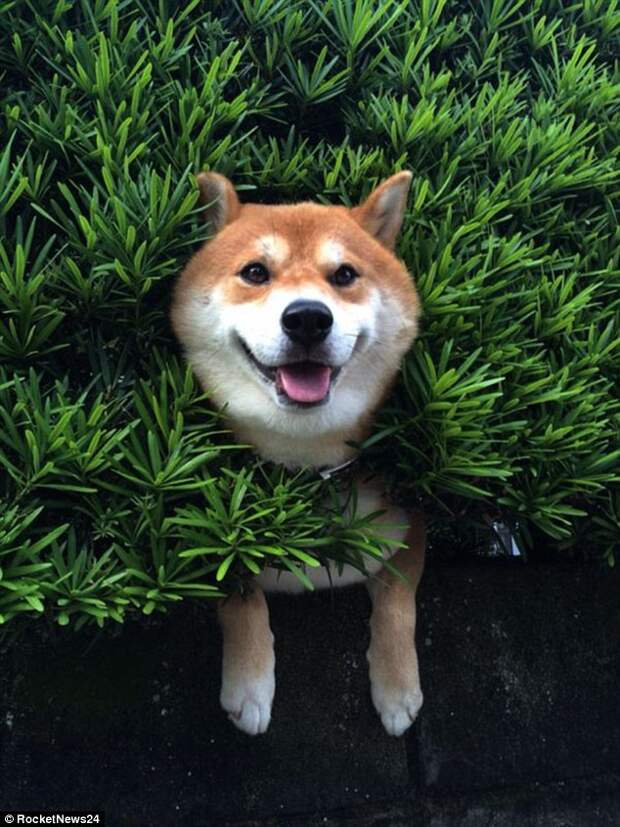 Забавные фотографии собак, которые приняли неверное решение