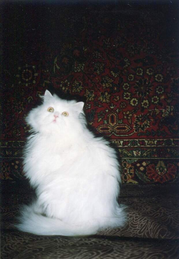 Стал кормить кошку подруги 2 раза в день, но хозяйка заявила, что я издеваюсь над голодным животным