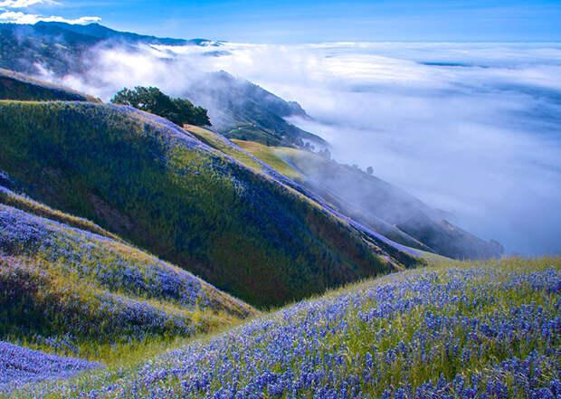 Красивый пейзаж над туманом (Douglas Croft, США).