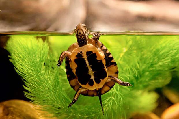 """30. """"Всем привет!"""" ниндзя, питомцы, черепахи"""
