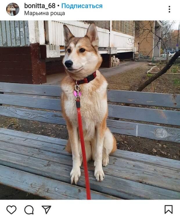 Фото дня: в Марьиной роще собака облюбовала скамейку
