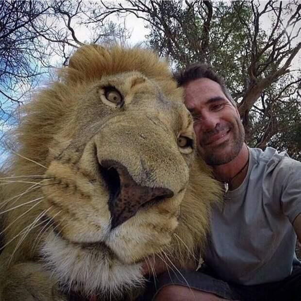 лев и человек