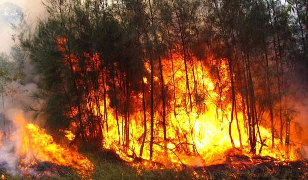Политики и экологи виноваты в вышедших из-под контроля лесных пожарах