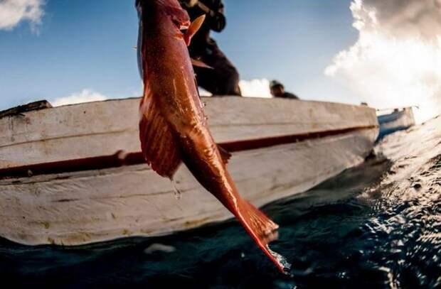 Тому, как баджао ныряют, могут позавидовать любые профессиональные дайверы. Но делают они это не для удовольствия, а чтобы прокормить себя и семью. А ещё они прекрасные кулинары: острый соус из хвостов скатов, лакомства из морских огурцов, осьминогов и моллюсков можно попробовать, пожалуй, только оказавшись у них в гостях.