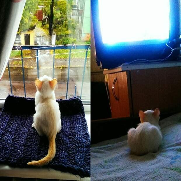 Зовут нашего кота Бошан...