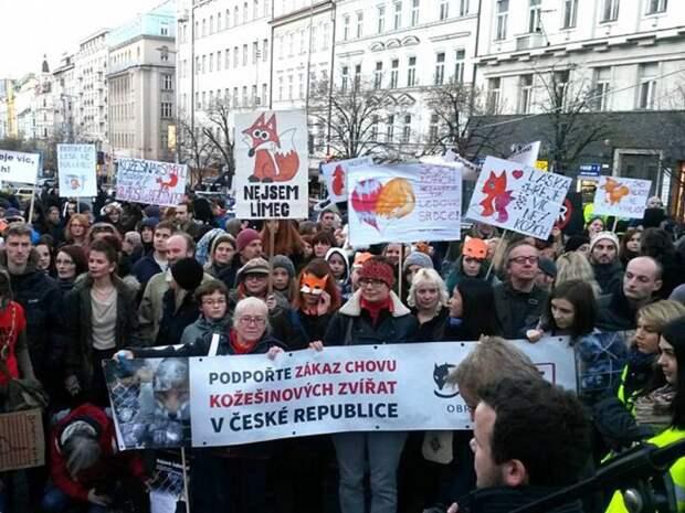 Парламент Чехии принял закон, запрещающий меховые фермы