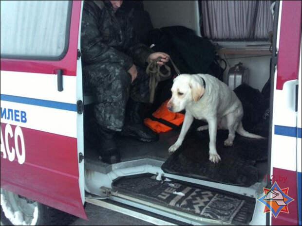 Могилевские спасатели вытащили из Днепра тонущего лабрадора