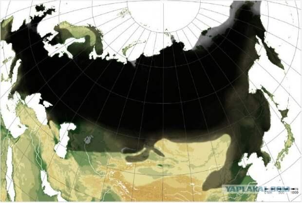 """Как извержение """"помогло"""" кроманьонцам или Рай Тундростепи, изображение №3"""