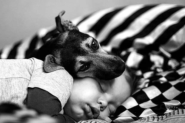 Кто находит верного друга, найдет и сокровище  дети, животные, фотография