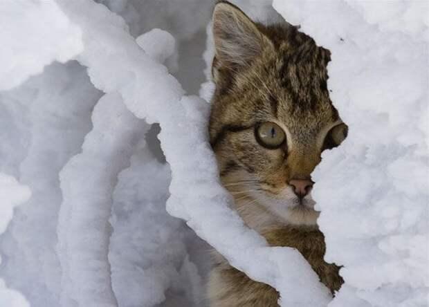 Фотоподборка кошек на снегу