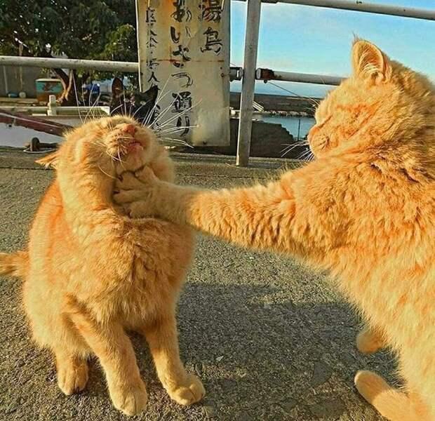 Причины, по которым кот может потерять доверие к вам навсегда