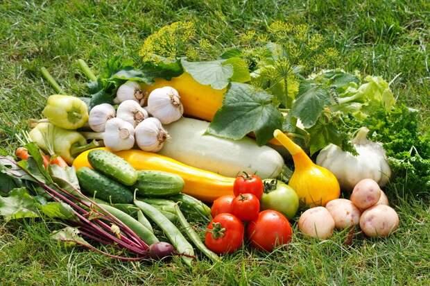 Три хитрости большого урожая от опытного агронома