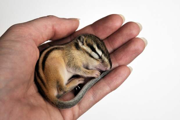 20 крошечных детенышей, которые помещаются в ладошку