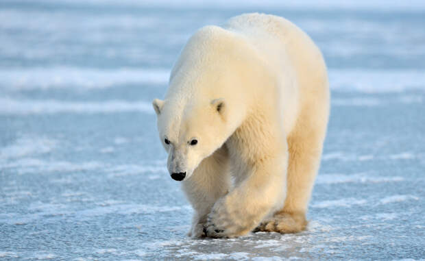 Самые опасные животные планеты