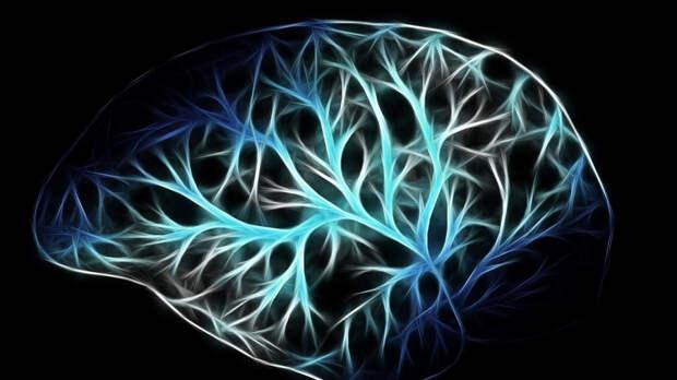 Ученые из РФ создали модель для изучения влияния диабета I типа на мозг
