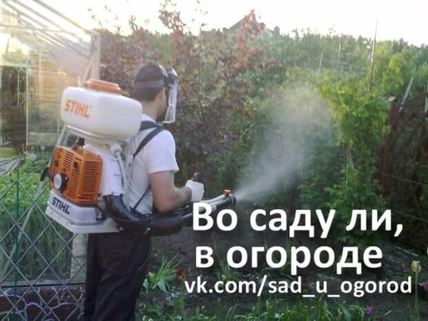 Как защитить кустарники от насекомых-вредителей.