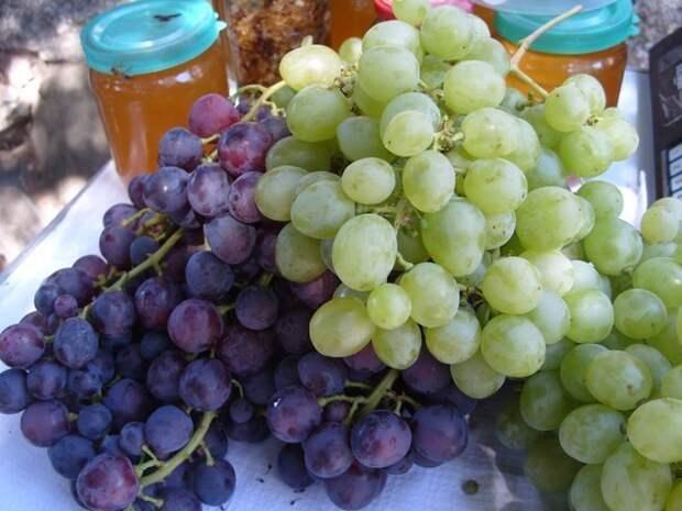 Виноград – одна из самых полезных ягод для человека.