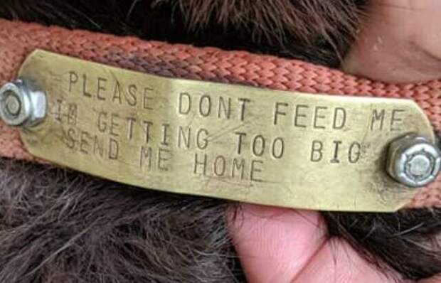 Люди заметили необычную надпись на ошейнике пса, который забежал во двор