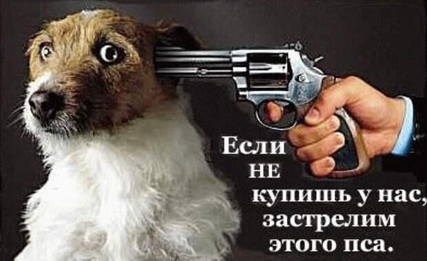 Ксении Собчак угрожают расстрелом