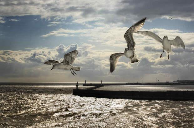 Пролетая над Dover