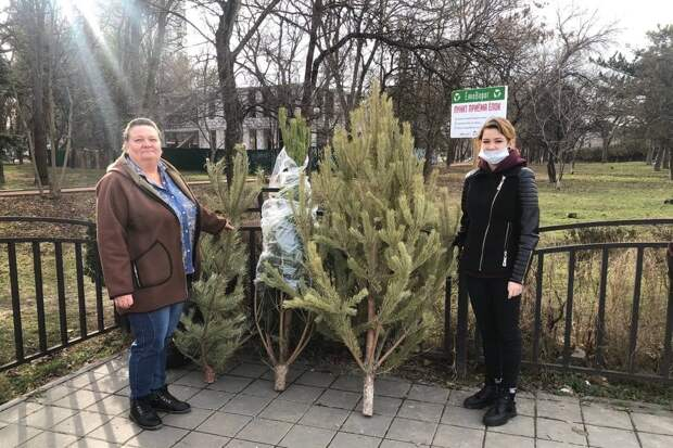 В Симферополе собрали более 500 новогодних деревьев в рамках экологической акции