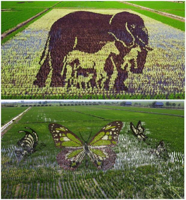 Объемные картины на рисовых полях. | Фото: Gooza.