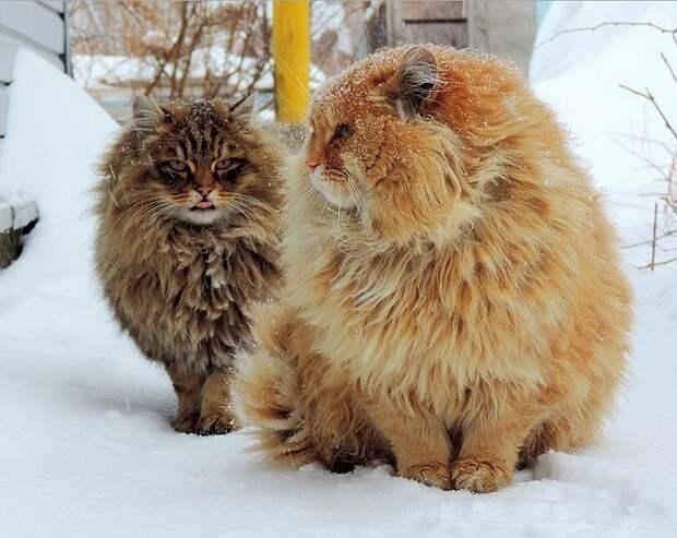 Необычная колония рыжих под Барнаулом