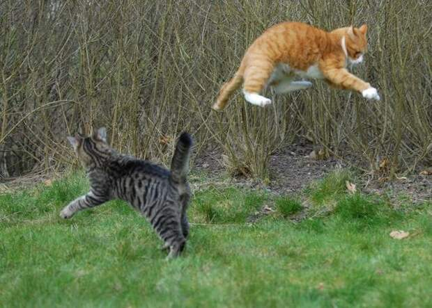 cat_flying_fight_12