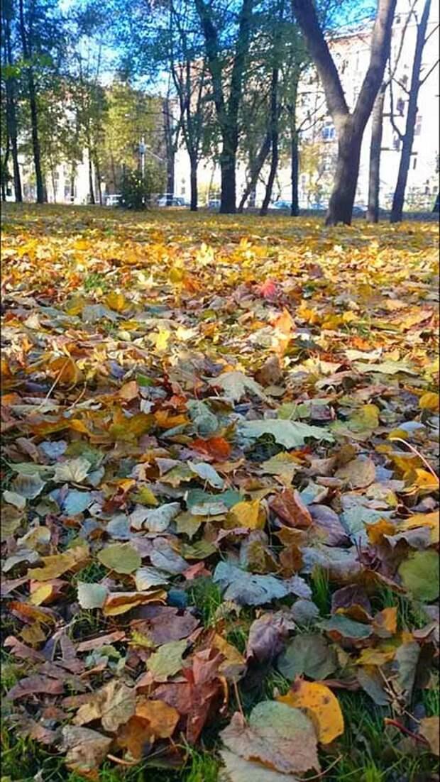 Золотая осень в сквере на улице Бажова