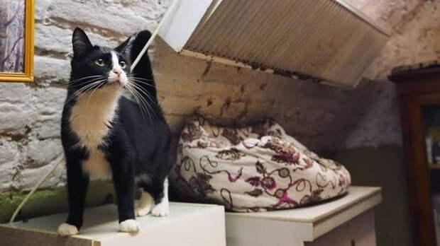 В России появится кошачий профсоюз