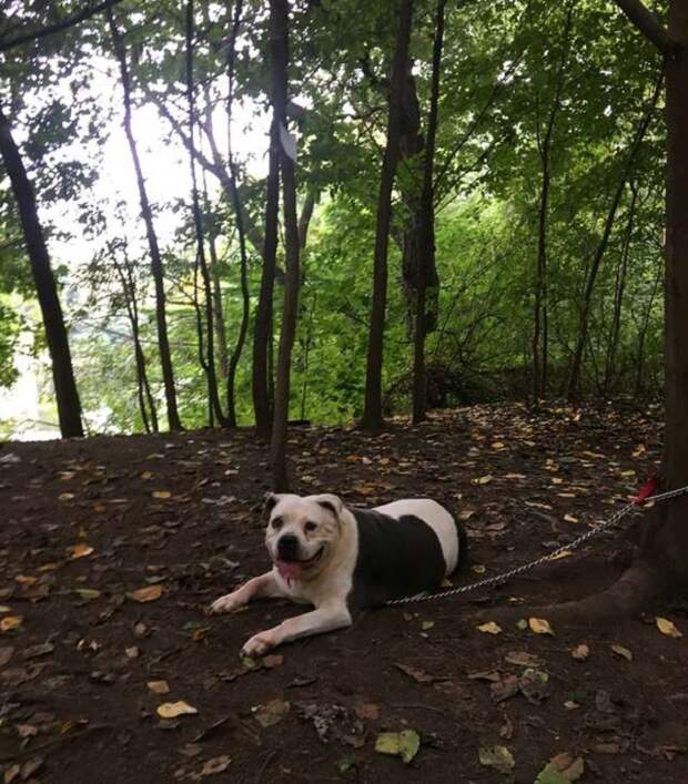 Пес лежит на земле