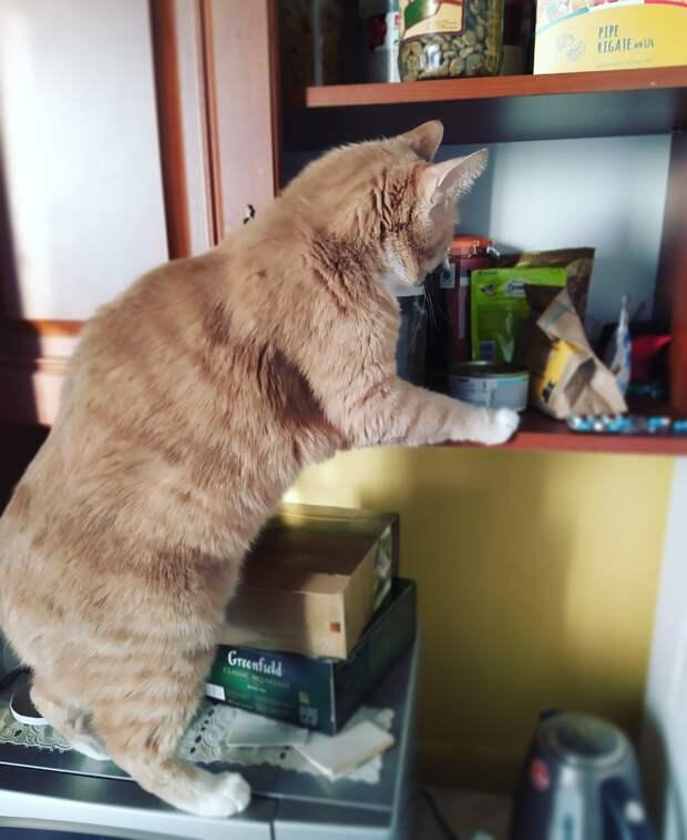 Рекс, колбаски нет. Чай скидывать?